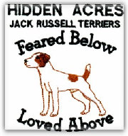Hidden Acres Jack Russell Terrier